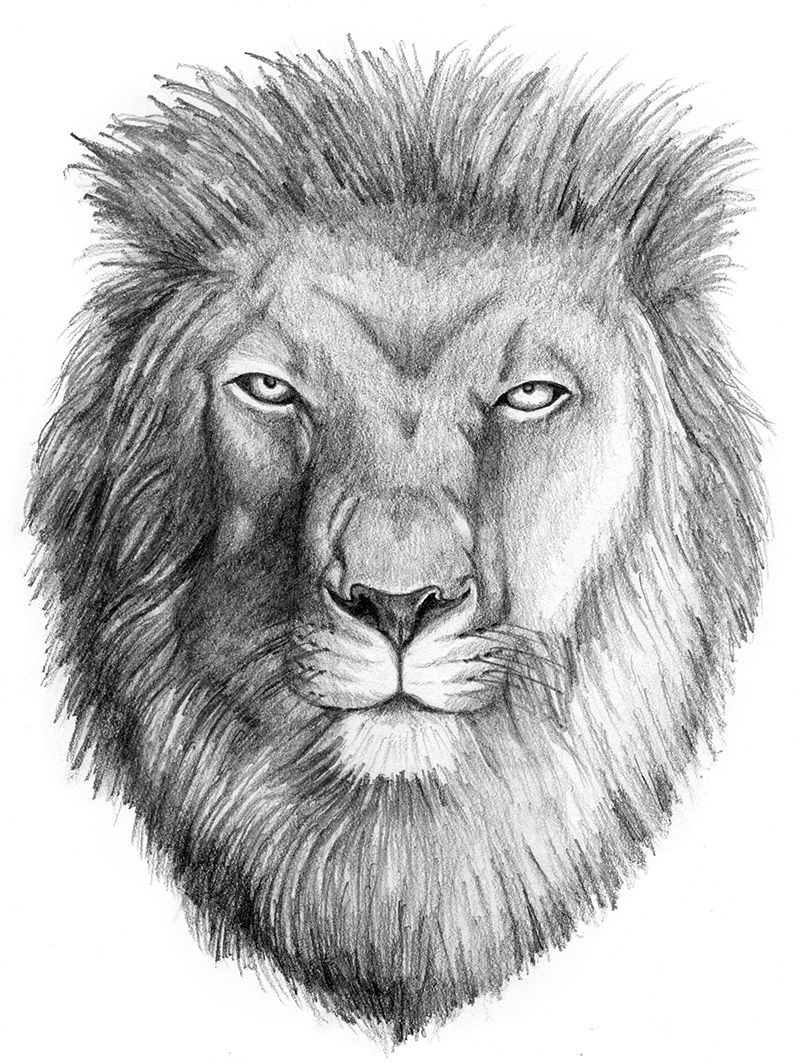 King Lion Head Pencil Art Drawing created by Brian T ...