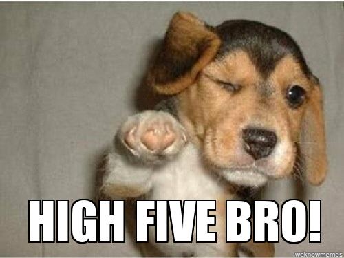 High Five Bro Komene Com Birthday Meme Dog Puppy Meme Happy Birthday Dog