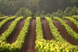 #viñas #murilloviteri #wine