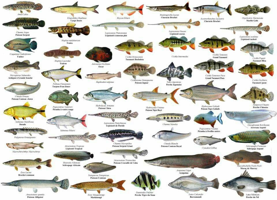 Pin de Jaime Diago en PECES | Pinterest | Carteles de animales, De ...