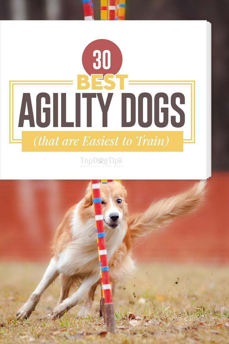 30 best agility dogs that were born to do this with