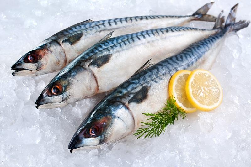 Kotlety Iz Skumbrii In 2020 Mackerel Fish Fish Mackerel