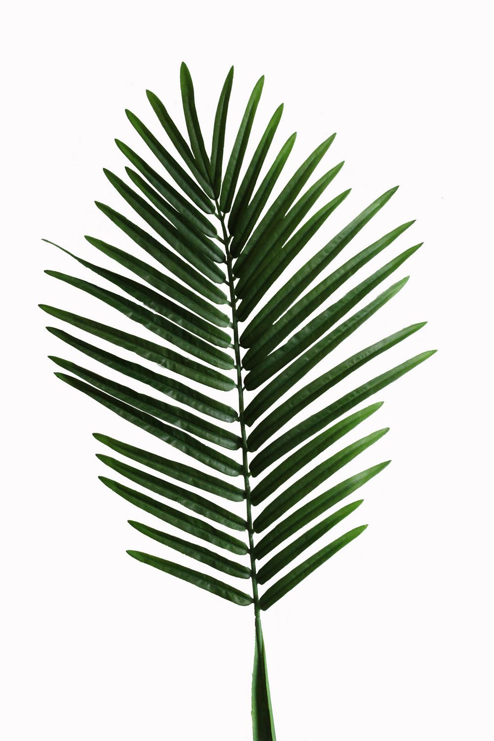 Artificial Leaf Palm Tree Palm Leaves Palm Spray Jtle 001 Jpg 1000 1500 Pixels Tropical Leaves Modern Tropical Leaves Juicy tropical leaves watercolor set of 59 files. pinterest