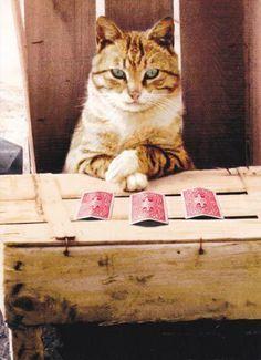 Pin On Crazy Cat Ladies