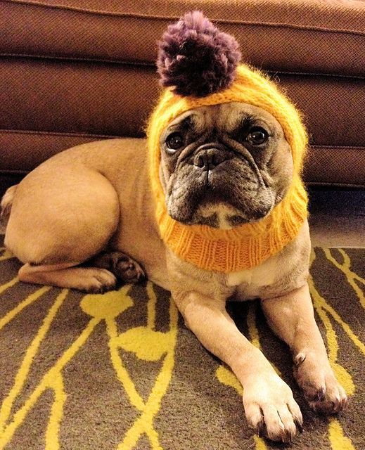 Ravelry Project Gallery For Anti Firework Dog Balaclava Pattern By
