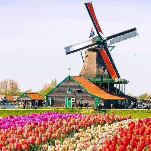 Visit the Tulip Festival in