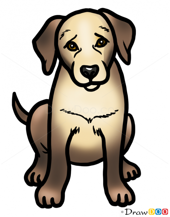 how to draw puppy labrador retriever dogs and puppies artsy