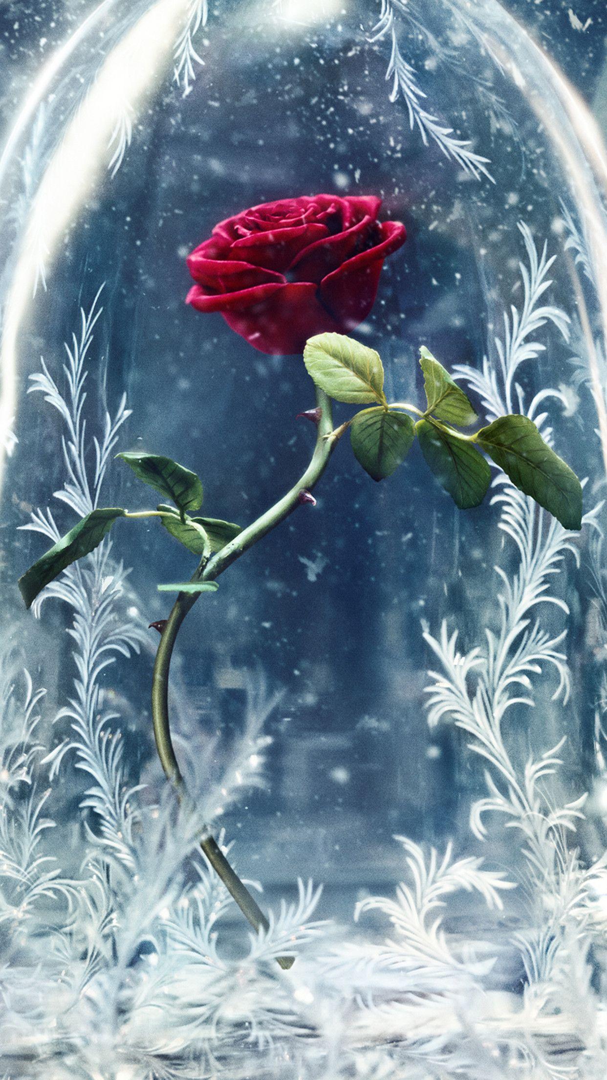 Wonderful Red Rose Protected From The Cold Winter Season Beast Wallpaper Disney Wallpaper Cute Disney Wallpaper