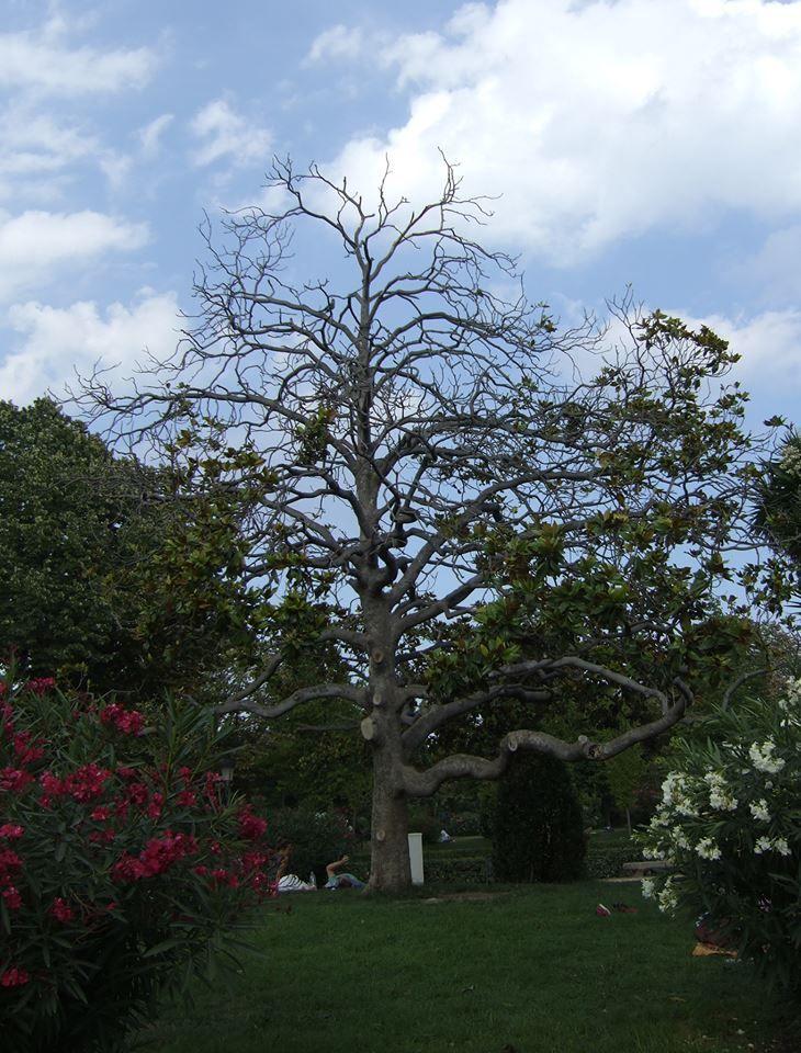 some tree!