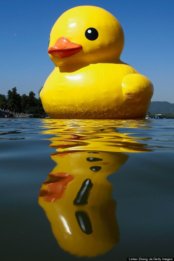 The Giant Rubber Duck Has Disappeared In China, All 54 Feet Of It ...