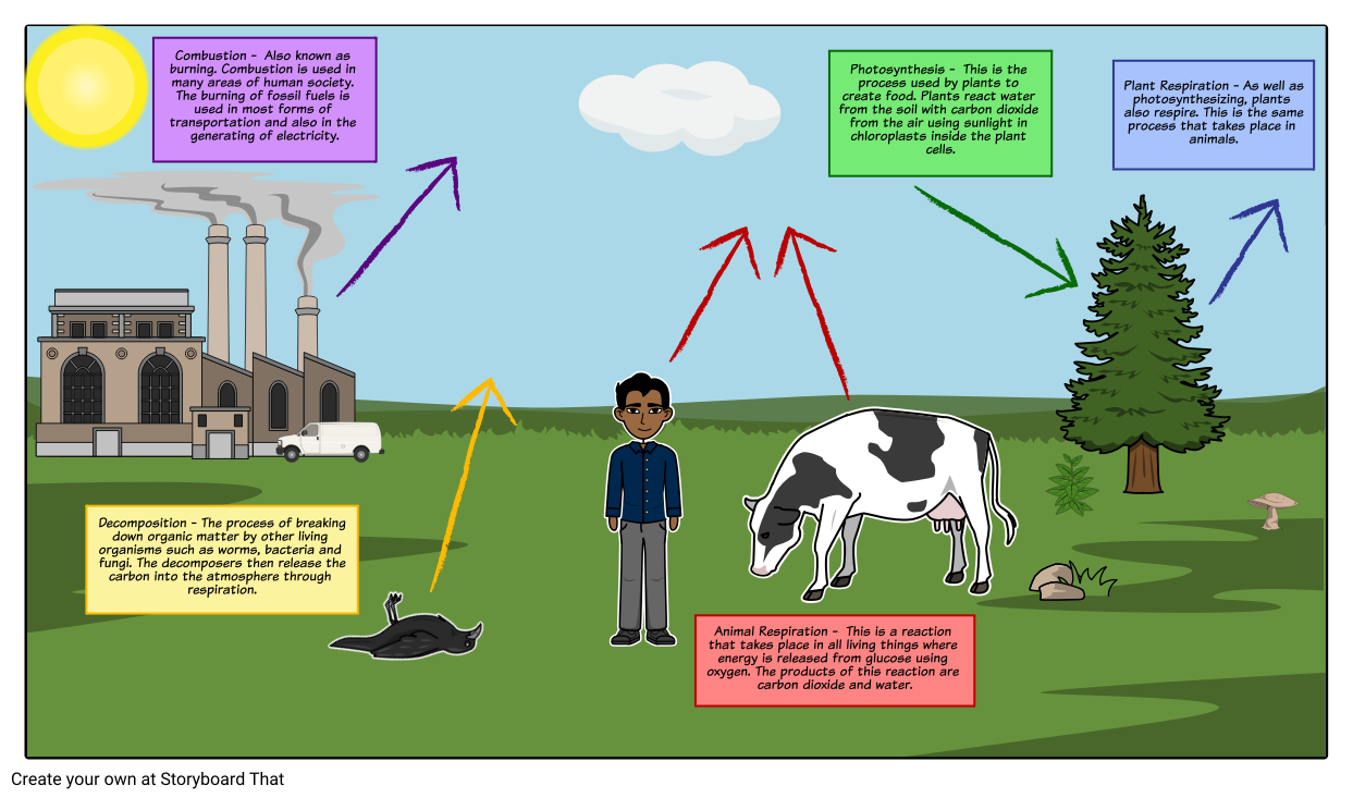 The carbon cycle diagram for this activity students will the carbon cycle diagram for this activity students will recreate a model of ccuart Images