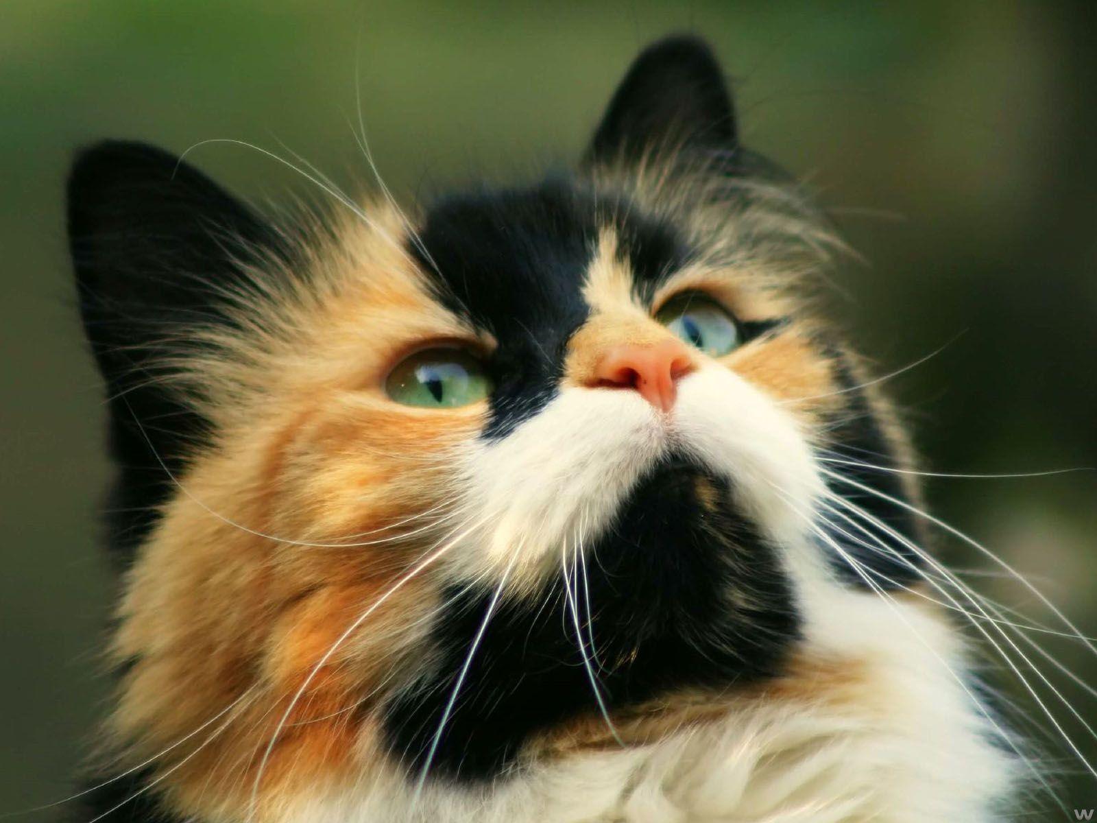 Cat 고양이
