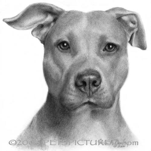 Pitbull Dibujo A Mano Dibujos Dibujos De Pitbull Dibujos De Perros