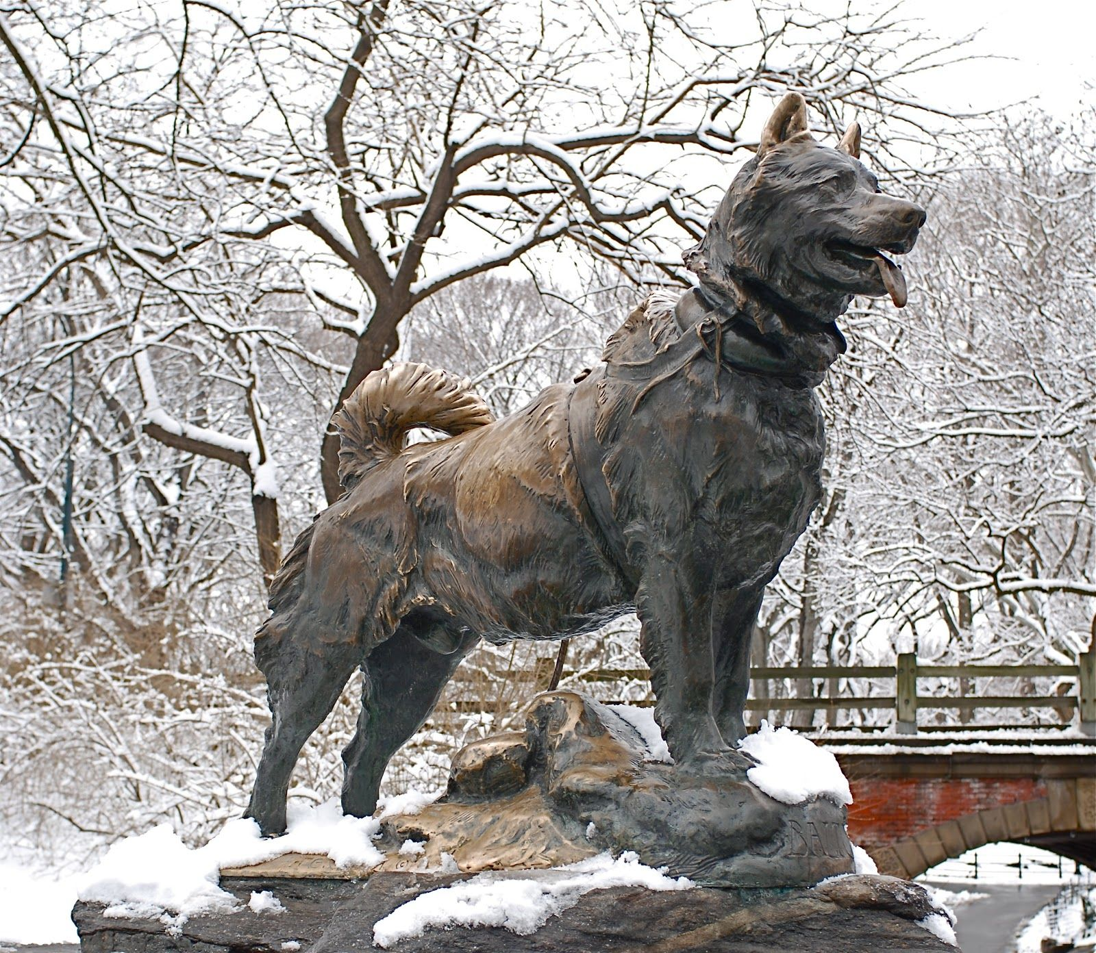 Bronze Statue Of Balto In Central Park New York City It Honors