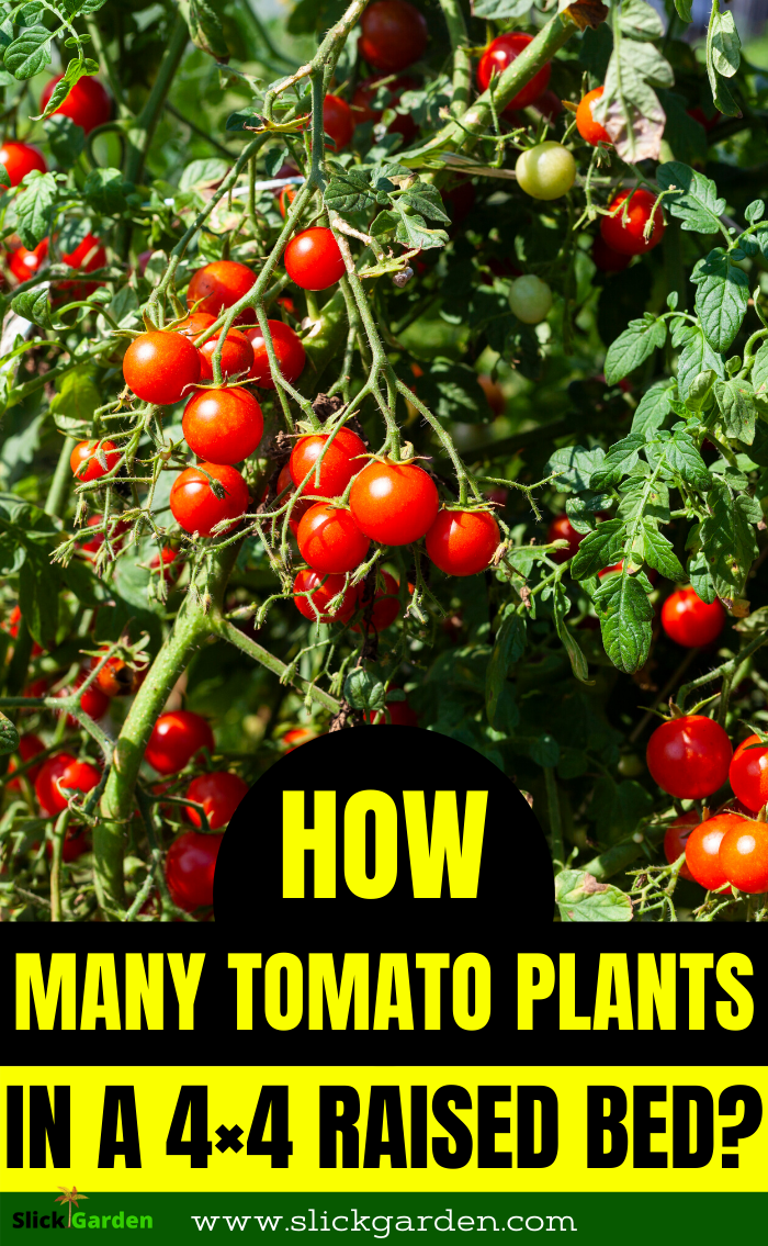 How Many Tomato Plants In A 4x4 Raised Bed In 2020 Growing Vegetables Tips For Growing Tomatoes Starting A Vegetable Garden