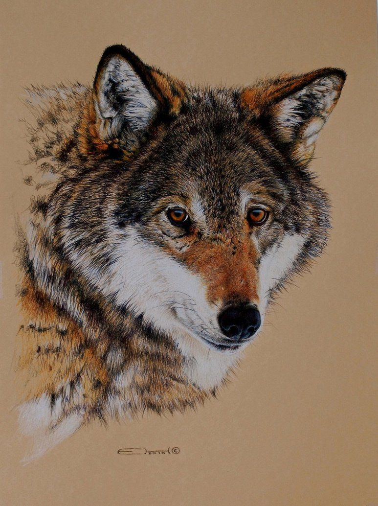 Wolf Portrait (Pencil) by EsthervanHulsen on DeviantArt