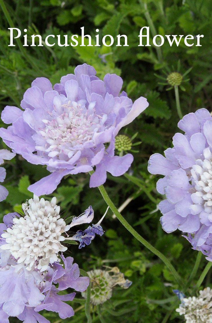 10 Best Perennial Flowering Plants For Your Backyard Pinterest