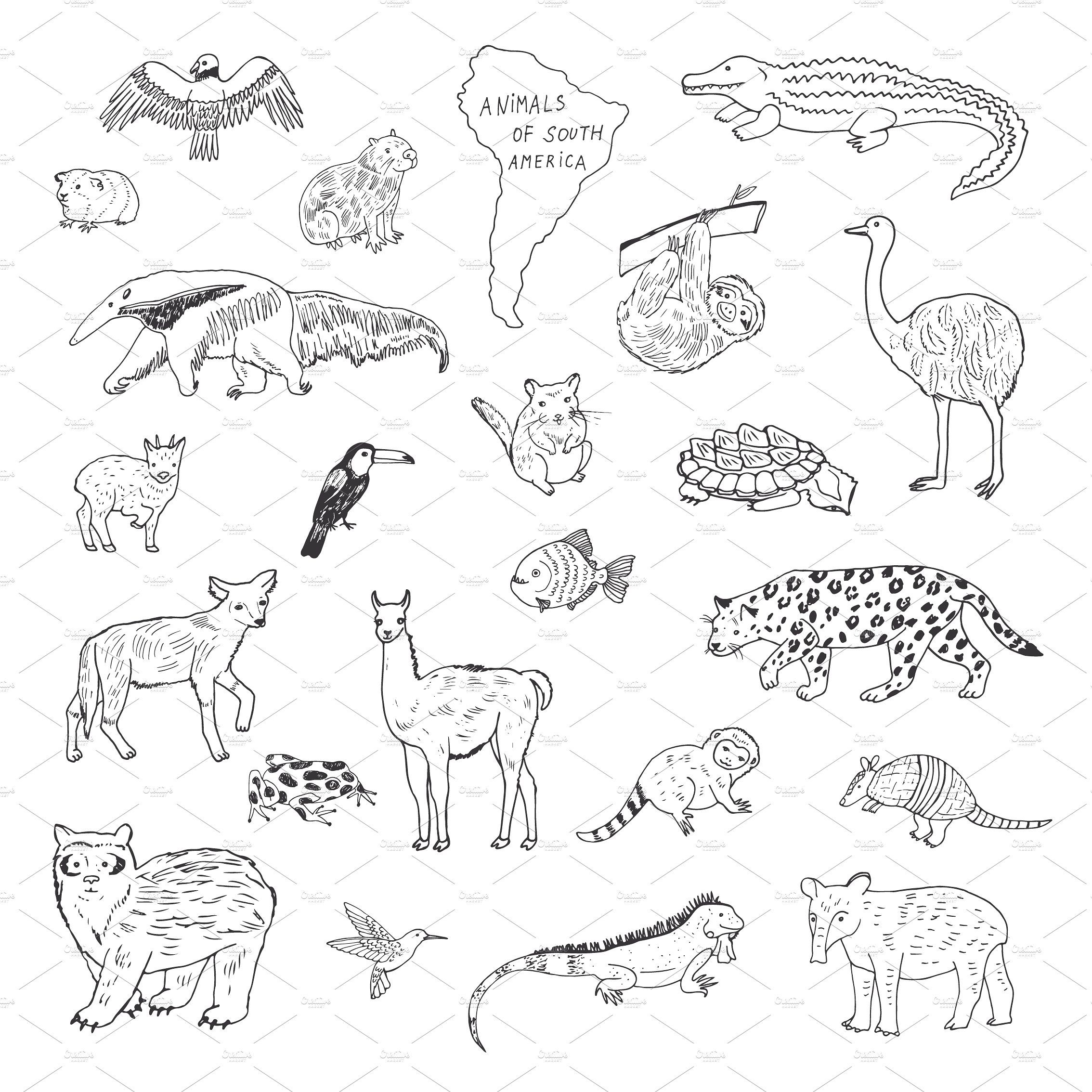 Animals Of South America Animal Coloring Pages American Animals Native American Spirit Animals
