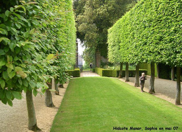 Charme palissé 150€ 5m | Garden | Amenagement jardin, Haie de charme ...