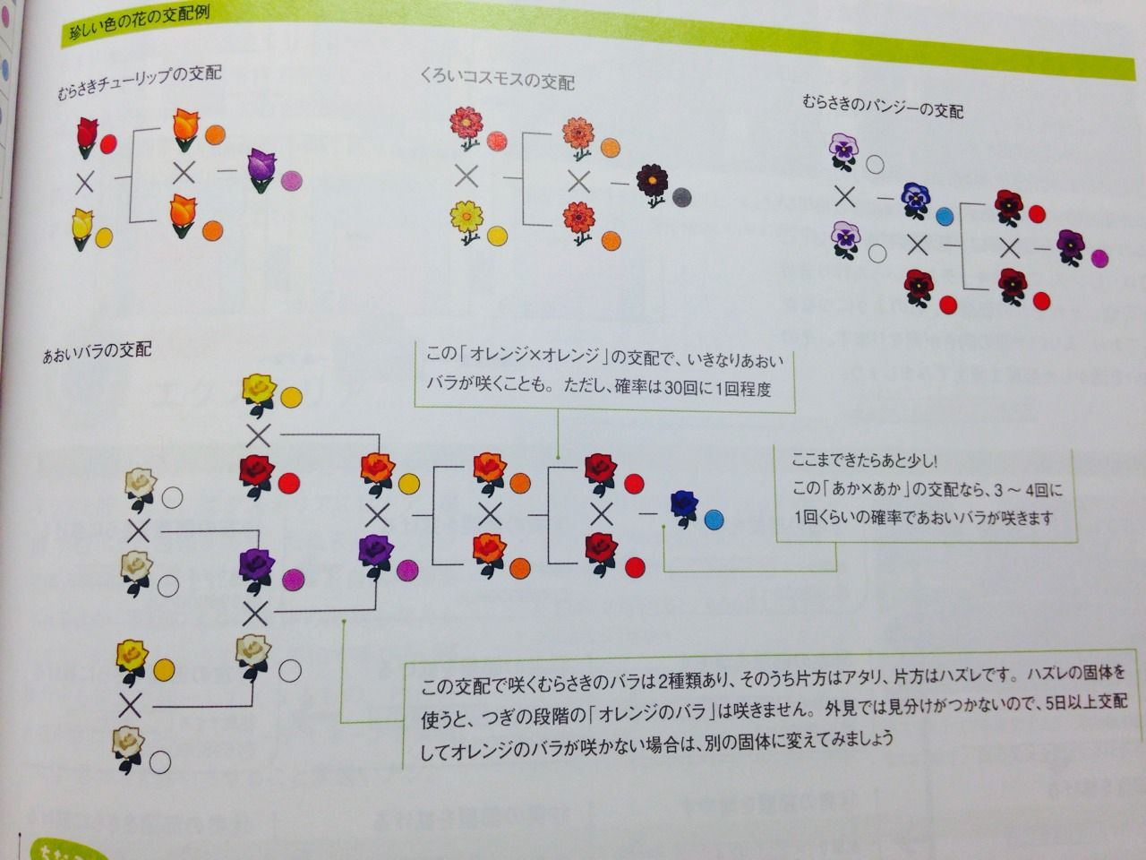 Flower breeding guide. It's in Japanese but you get the