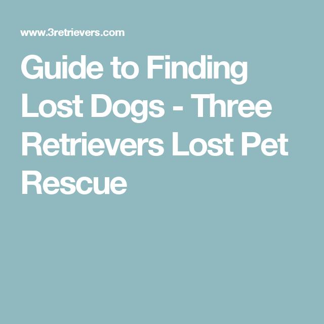 Lost Dog Behavior