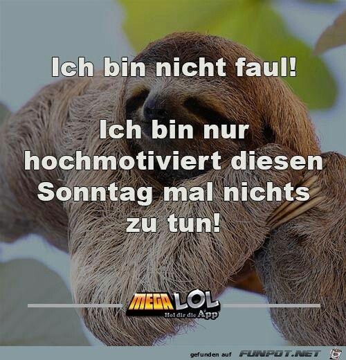Pin Von B D Auf Funny Lustige Sprüche Sprüche Und Lustig