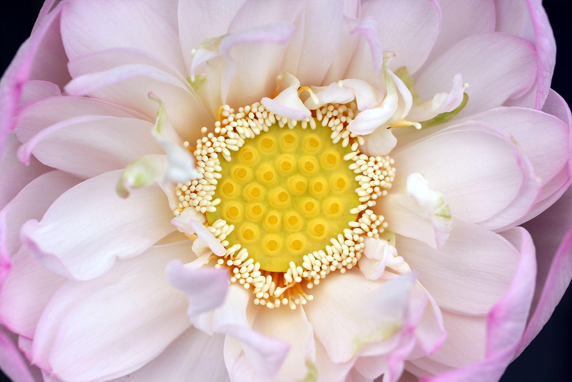 Inside Of Lotus Flower By Seungchul Choi On 500px Flowers