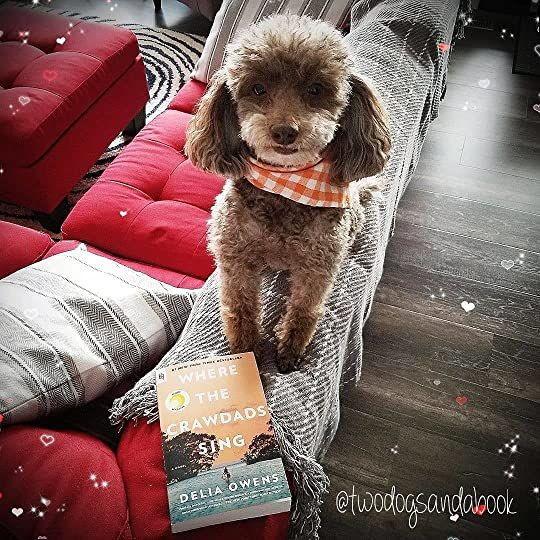 Click on the image to read my complete book review.  #poodles #poodlestagram #poodlesofinstagram #furbabies #dogsofinstagram #bookstagram #dogsandbooks #bookishlife #bookishlove #bookstagrammer #book #books #booklover #bookish #bookaholic #reading #readersofinstagram #instaread #ilovebooks #bookishcanadians #canadianbookstagram #bookreviewer #bookcommunity #bibliophile #bookphotography #wherethecrawdadssing #deliaowens #bookreview #booksconnectus