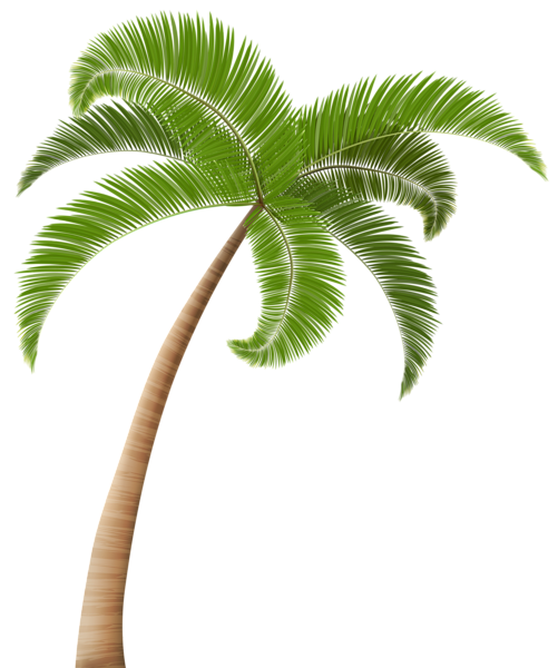 A Collection Of Tropical And Subtropical Plant Images With Transparent Background Tree Photoshop Tropical Tree Plants