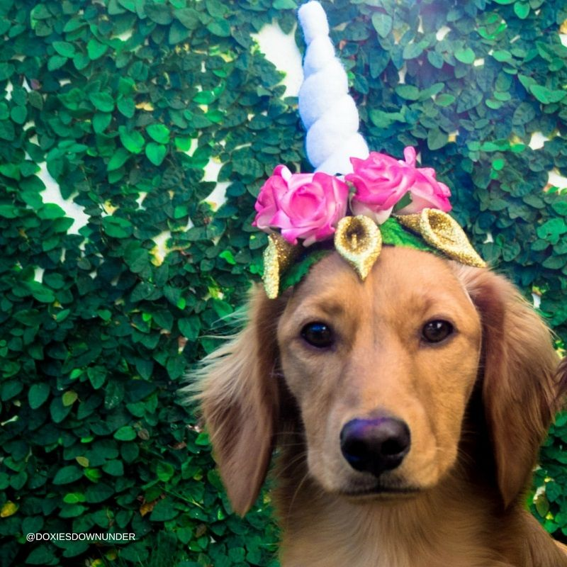 How To Make A Unicorn Headband For Your Dog With Images