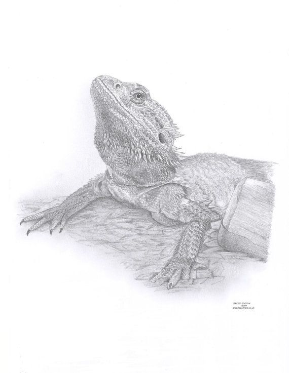 BEARDED DRAGON Limited Edition art drawing print signed by UK artist