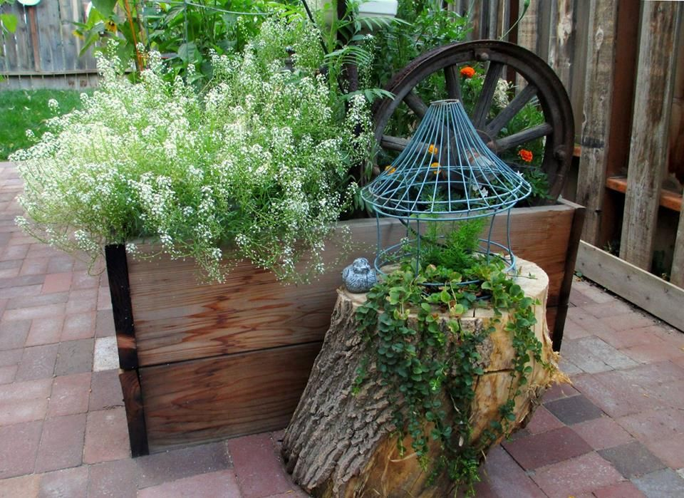 Old stumps are so handy in and around the gardens, they can serve as a table to hold a potted plant or you can plant them