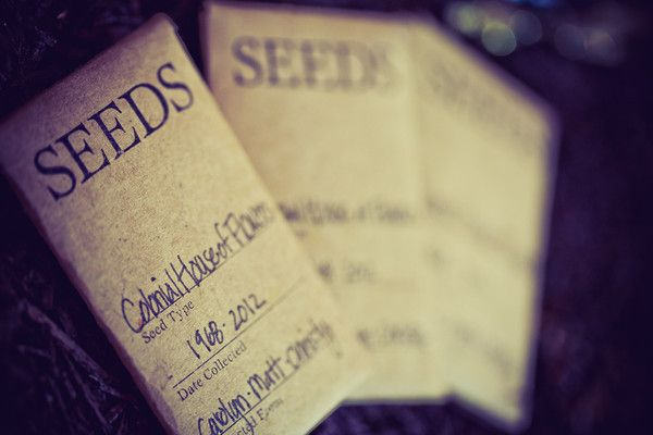 Seeds. The shop is always growing, blooming, transforming... through the generations.