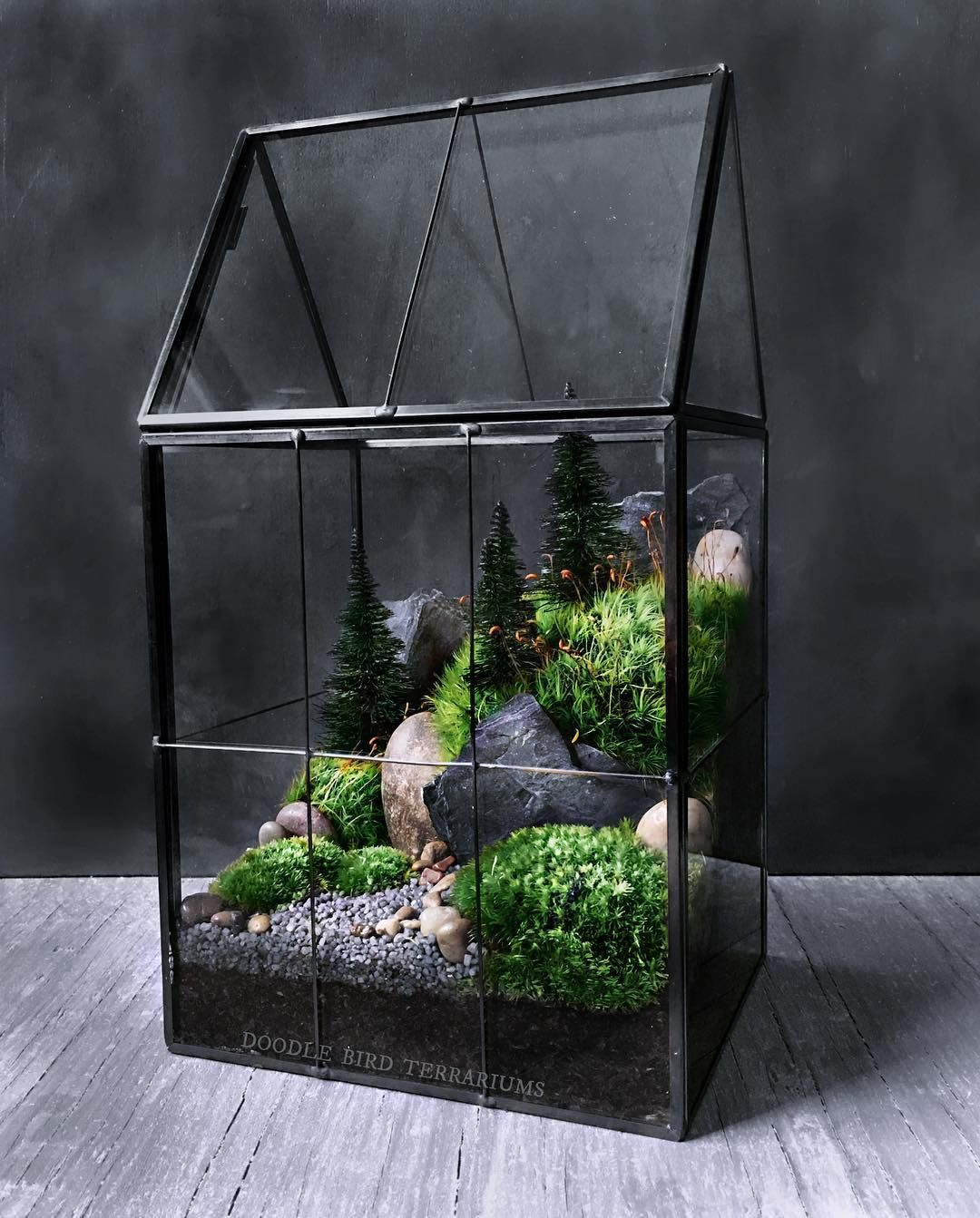 New In My Shop Greenhouse Terrarium Planted With Live Mosses And Faux Pine Trees It Has A Hinged Roof For Ea Moss Terrarium Large Greenhouse Garden Terrarium