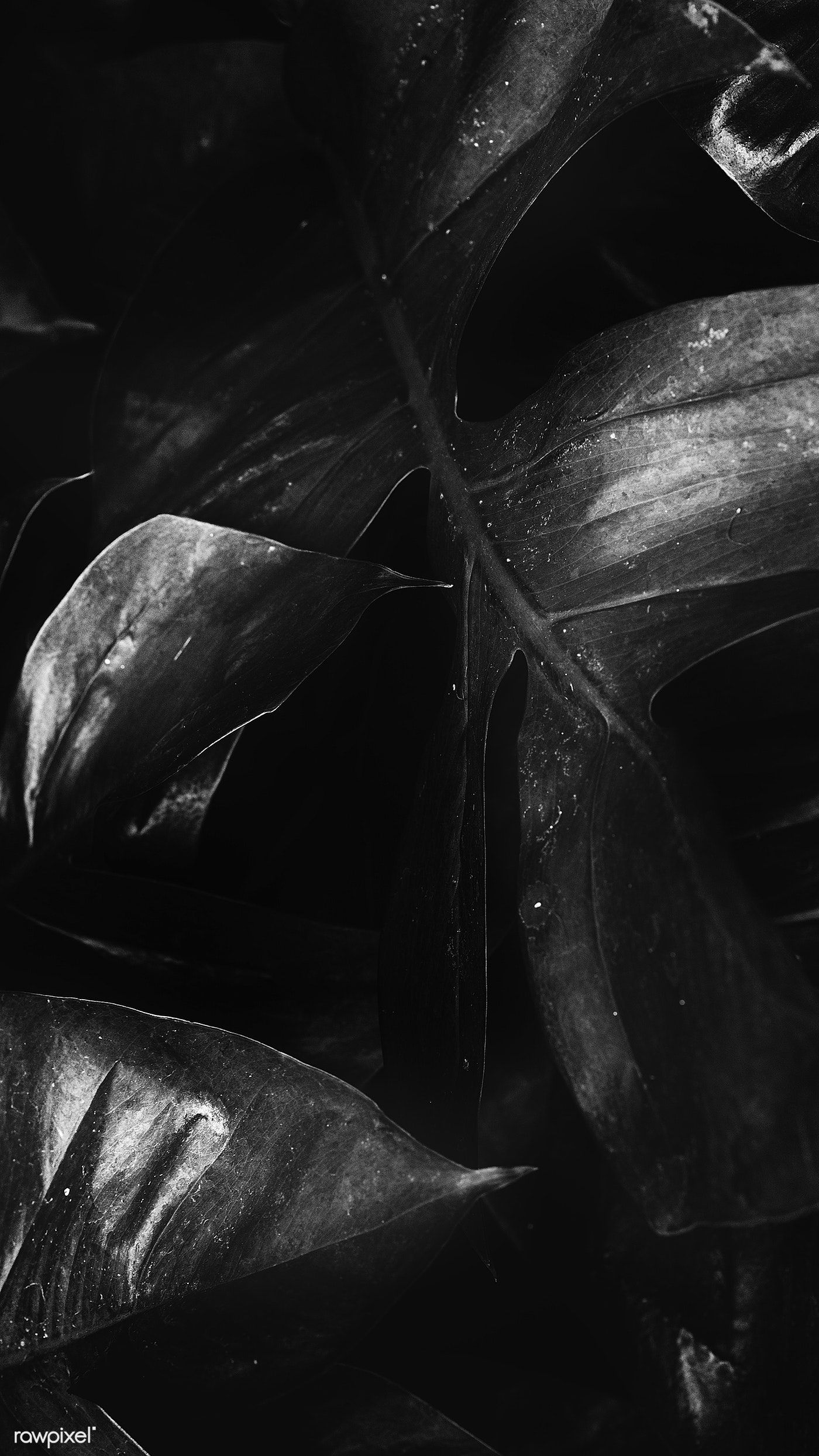 Download Premium Image Of Black And White Tropical Jungle Foliage Banner Black And White Background Black And White Black And White Wallpaper