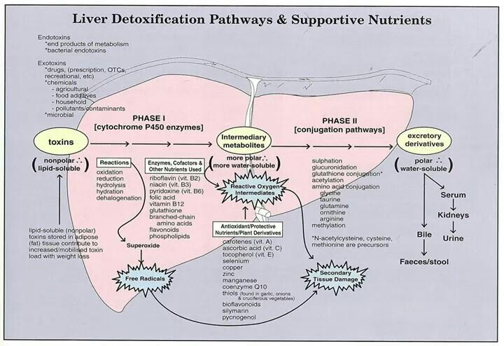 Phase ii liver detox mthfr pinterest liver detox detox and clinic liver detox pathways diagram one item missed in protective nutrients n acetyl cysteine a liver repairer used by hospitals ccuart Choice Image