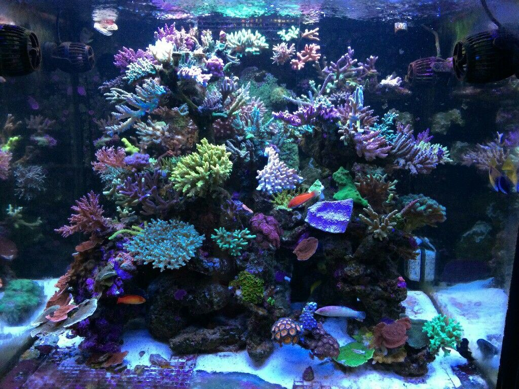 Pin By Nicolai Engelmann On Aquariums Design And Consept Coral Reef Aquarium Saltwater Aquarium Fish Reef Tank