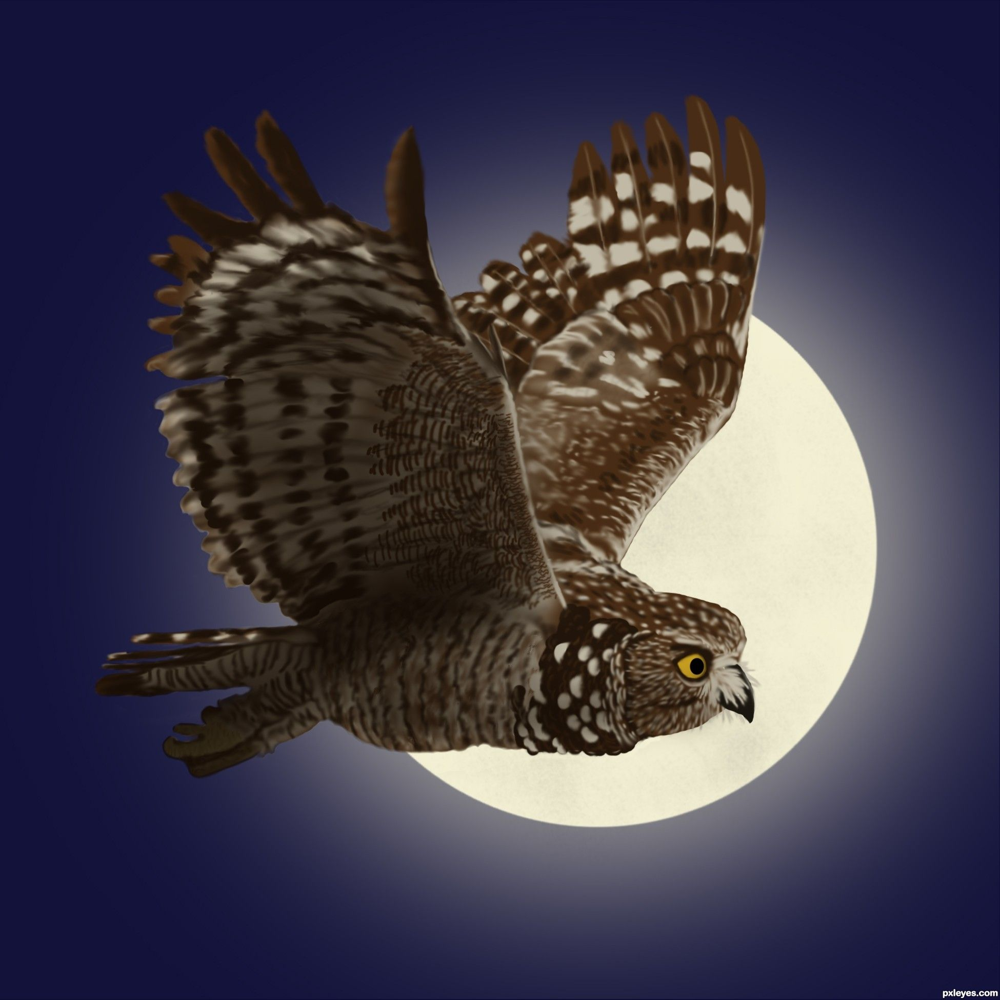 Owl Flying At Night Aol Image Search Results Creatures Of The