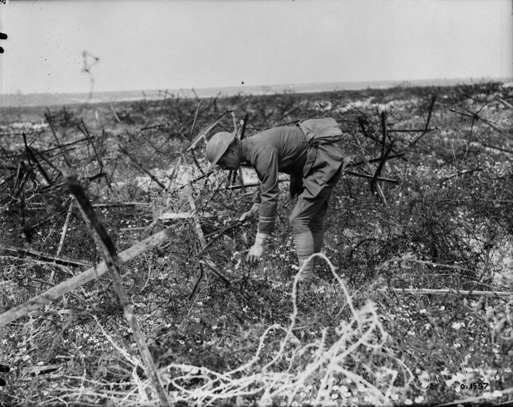 WWI, July 1917; A Canadian officer picking flowers among barbed wire ...