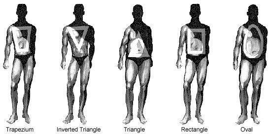 fc472f3c93 Descriptive Faces--A Resource for Writers  Male Body Shape