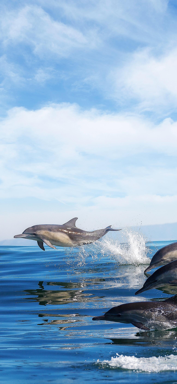 Pin Von Renata Holcer Auf 1334 X 750 Px Wassertiere Delfine Bilder Meerestiere
