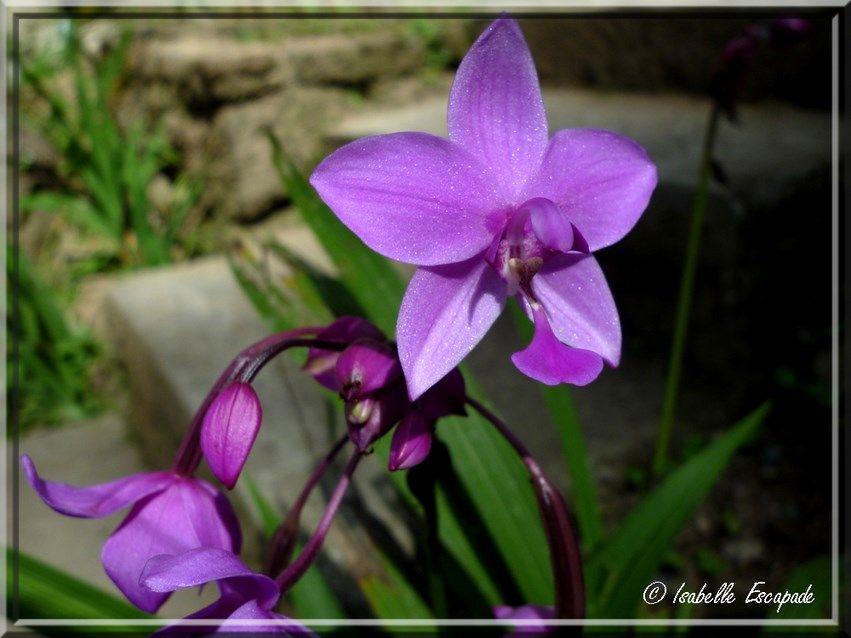 Fleur de Bali    http://indonesie.eklablog.com/