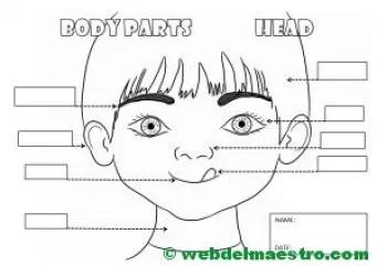 Las Partes De La Cara En Ingles Buscar Con Google Partes De La Cara Caras Partes De La Misa
