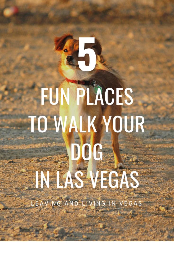 Pet Friendly Hotels In Las Vegas To Pamper Your Best Friend Dog Friendly Hotels Las Vegas Hotels Pet Friendly Hotels