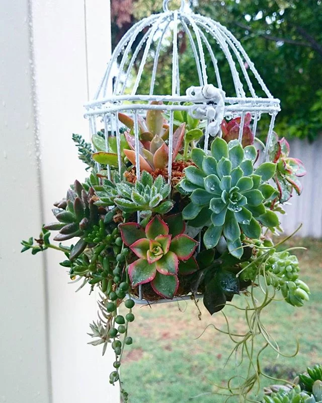 Home & Garden | Stop and Admire These Charming Succulent Birdcages — Then DIY Them!