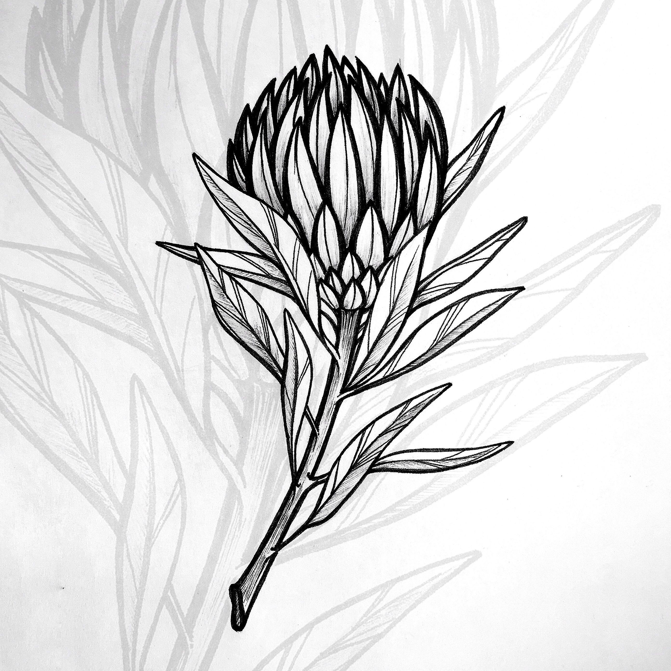 Botanical Drawing Chu Daria Protea Line Flowers Sketchbook Protea Art Botanical Art Drawing Flower Line Drawings