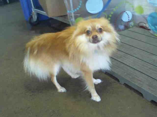 Orange County Animal Services Pet Rescue Adoption Center 2769 Conroy Road Orlando Fl 32839 2162 Email Animalservices Ocfl Net Animals Animal Rescue Pets