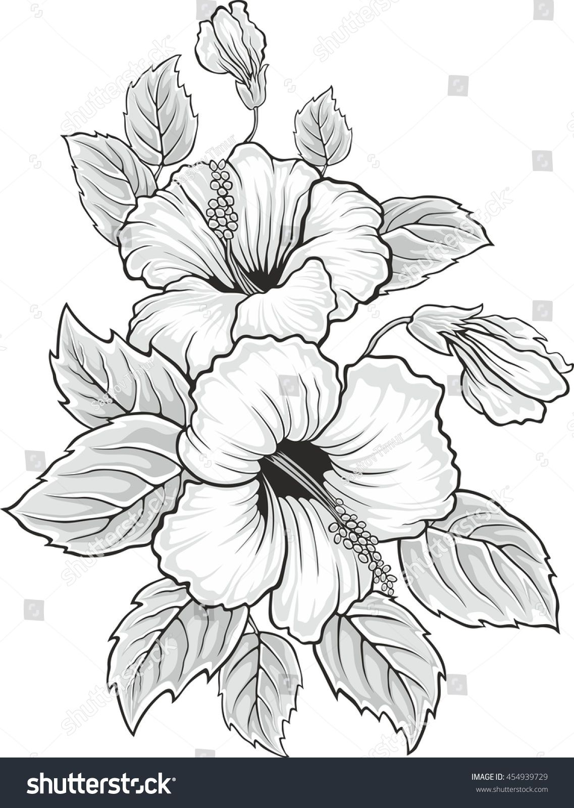 Stock vector blooming beautiful hibiscus flower hawaii for Hibiscus flower tattoo sketches