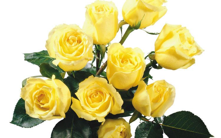 Cvety 2 Embroidery Yellow Rose Bouquet Rose Flower Wallpaper