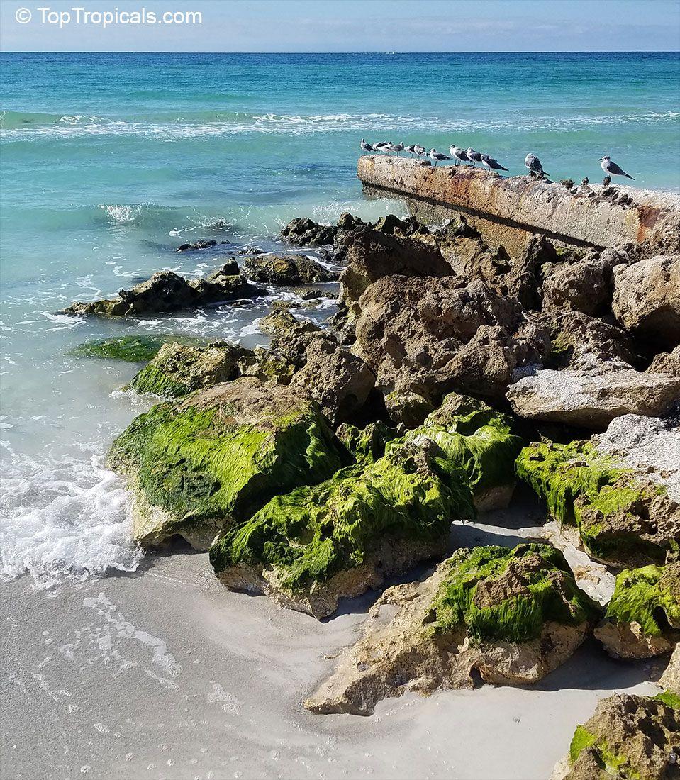 Stump Pass Beach State Park in Englewood, FL   Nature ...